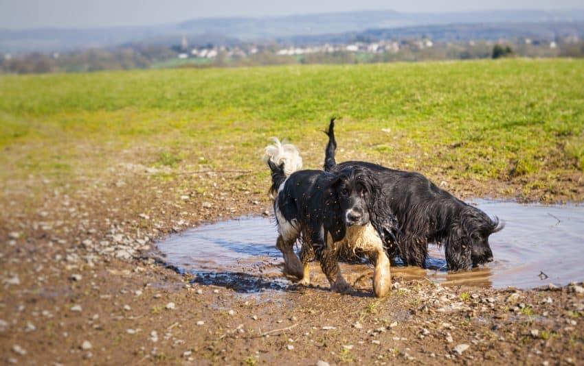 easy-muddy-dog-yard-solutions