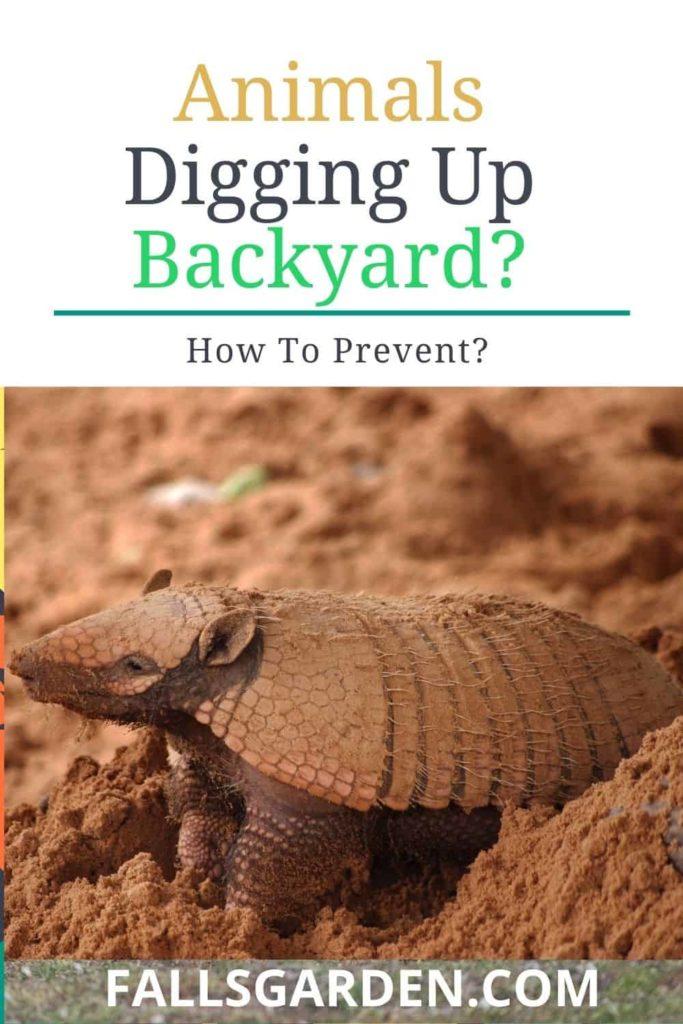 animals-digging-up-backyard