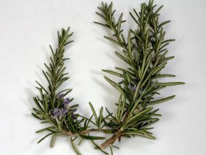 Grow-Rosemary-in-a-cup