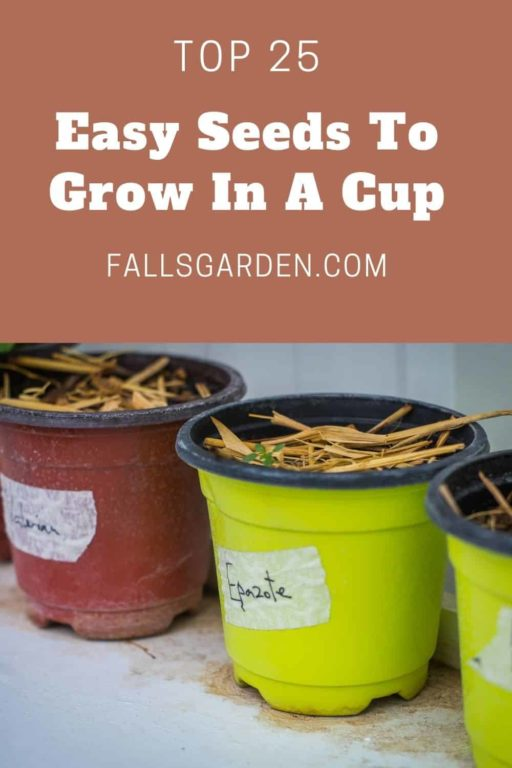 easy-seeds-to-grow-in-a-cup