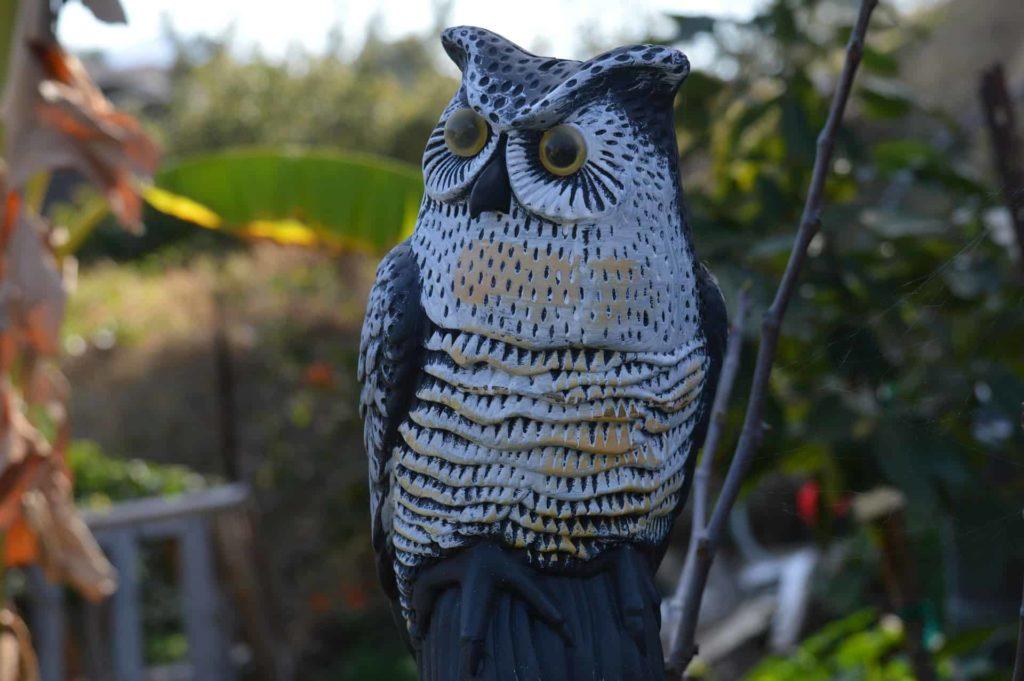 Fake-owl-scarecrow