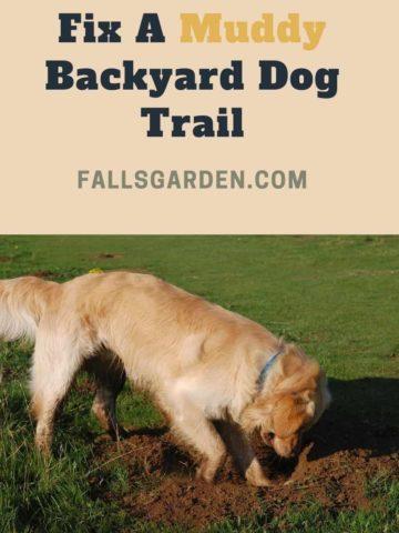 fix-a-muddy-backyard-dog-trail