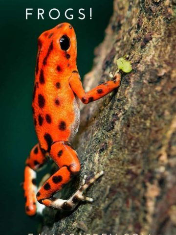 get-rid-of-frogs-humanely
