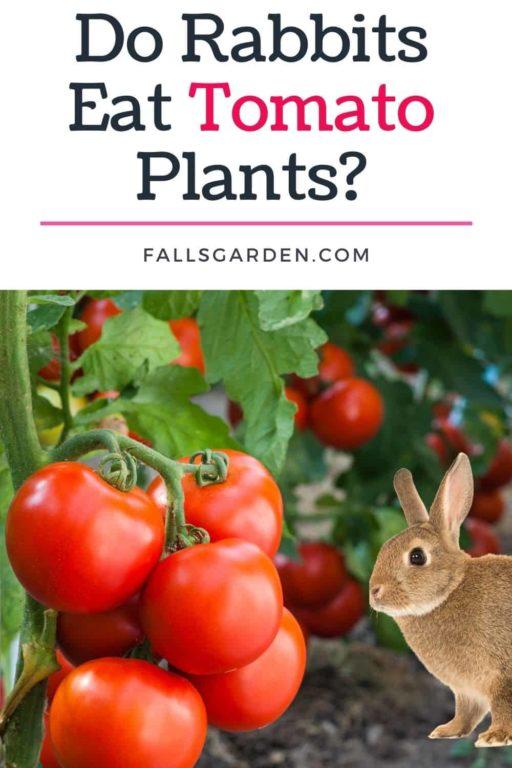 Do-Rabbits-Eat-Tomato-Plants
