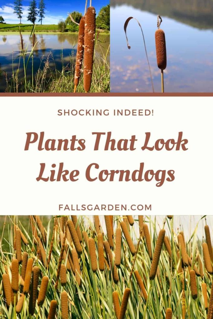 Plants_That_Look_Like_Corndogs
