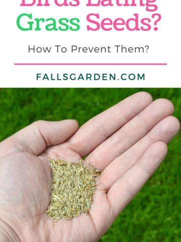 birds-eating-grass-seeds