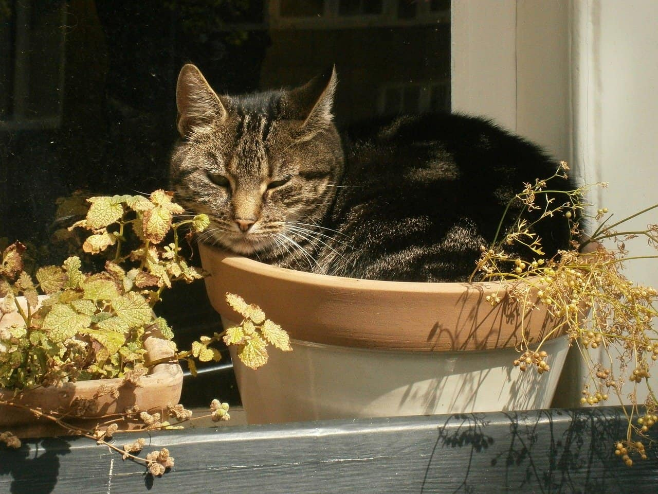 Why-cats-get-into-house-plants