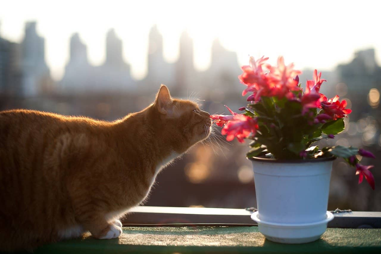 Cats-and-house-plants
