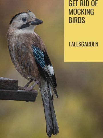 get-rid-of-mockingbird