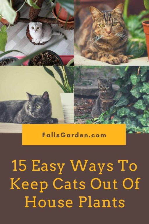 how-to-keep-cats-out-of-house-plants