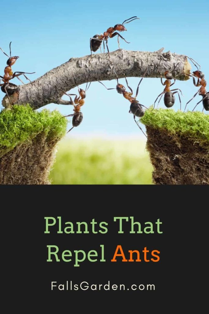 plants-that-repel-ants