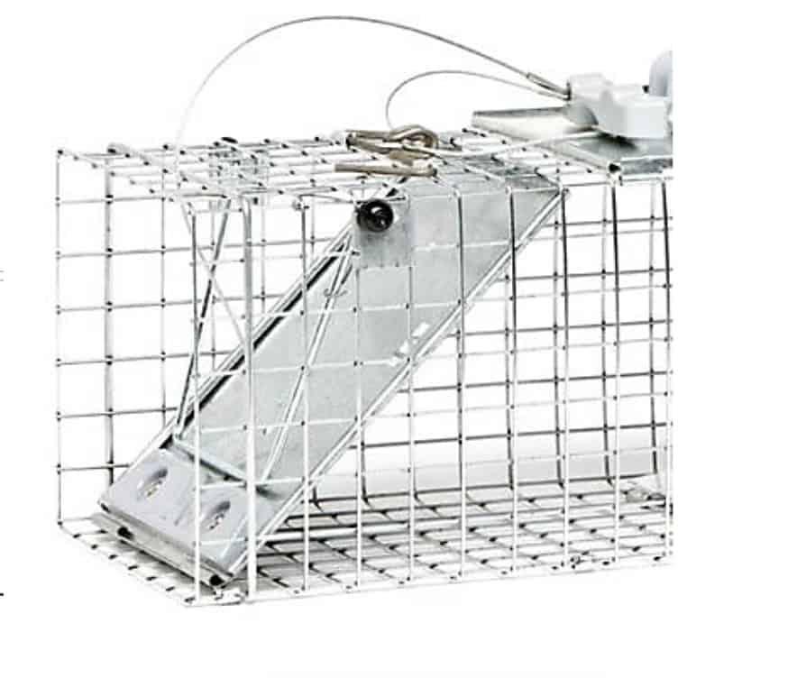 rabbit-trap
