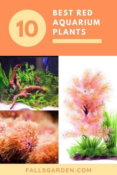 Best-red-freshwater-aquarium-plants