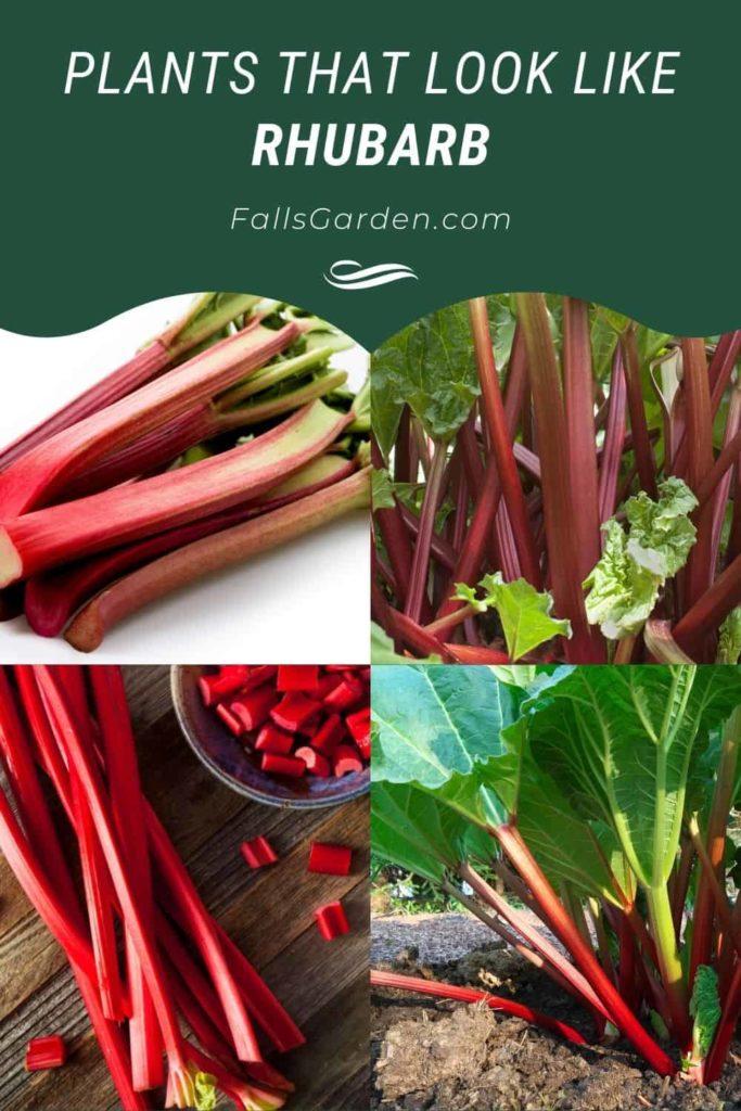 Plants-That-look-like-Rhubarb
