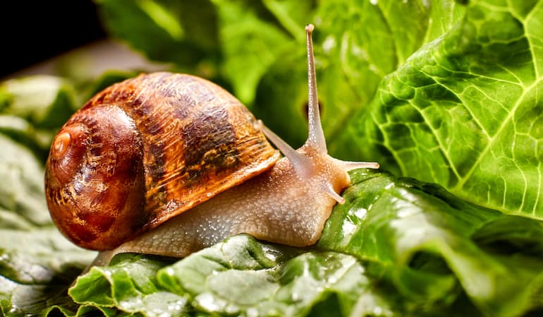 get-rid-of-slugs-in-potted-plants