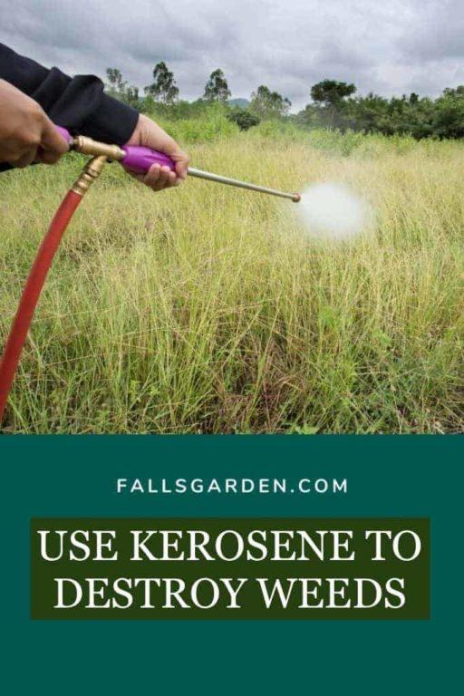 Kerosene-for-weed-control