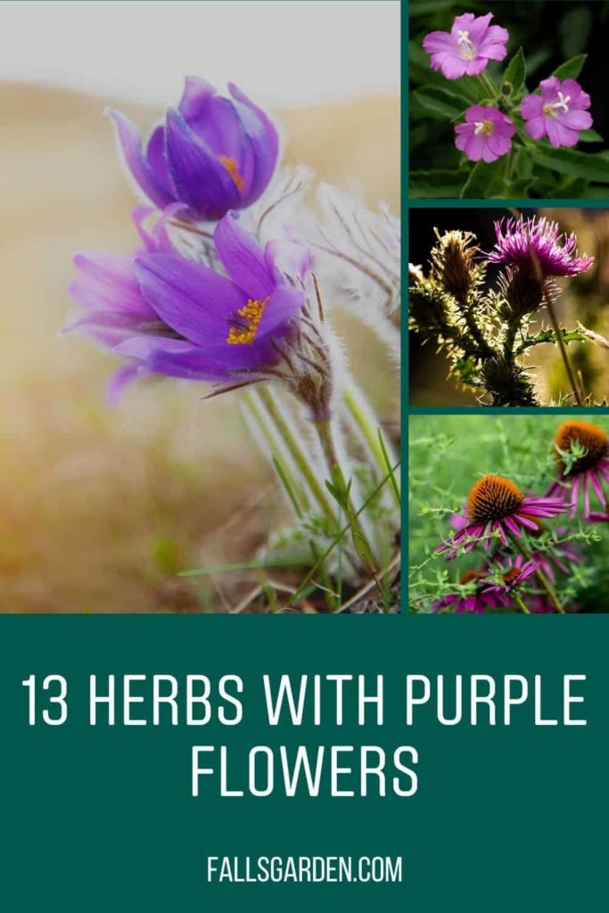 13-Herbs-With-Purple-Flowers