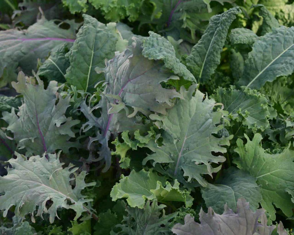 leafy-vegetables-alongside-spinach
