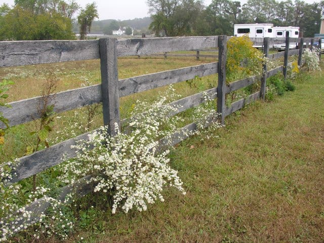weeds-coming-through-the-fence