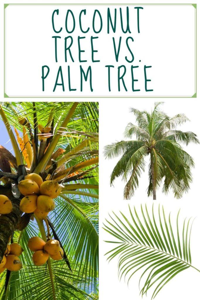 CoCONUT-vs-PALM