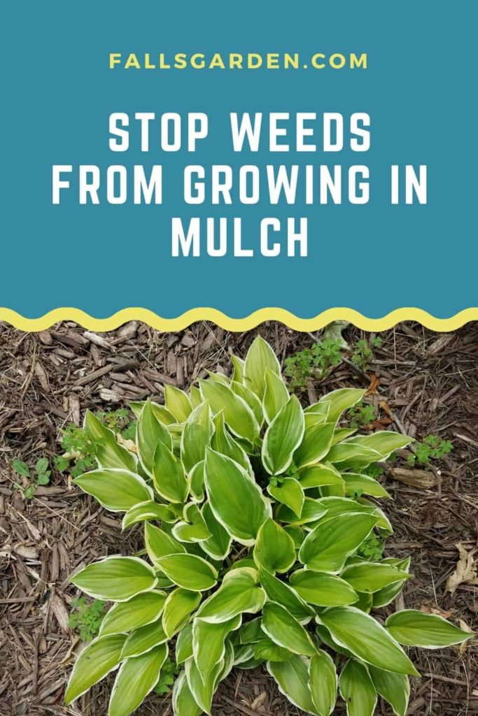 Stop-Weeds-From-Growing-In-Mulch