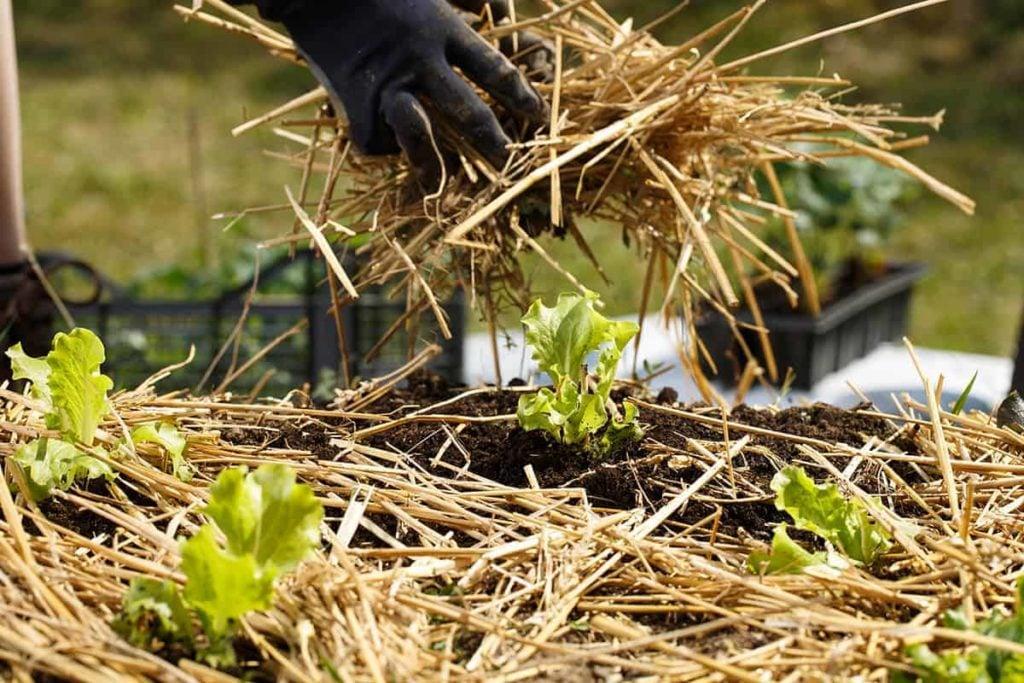 Stop-weeds-growing-through-mulch