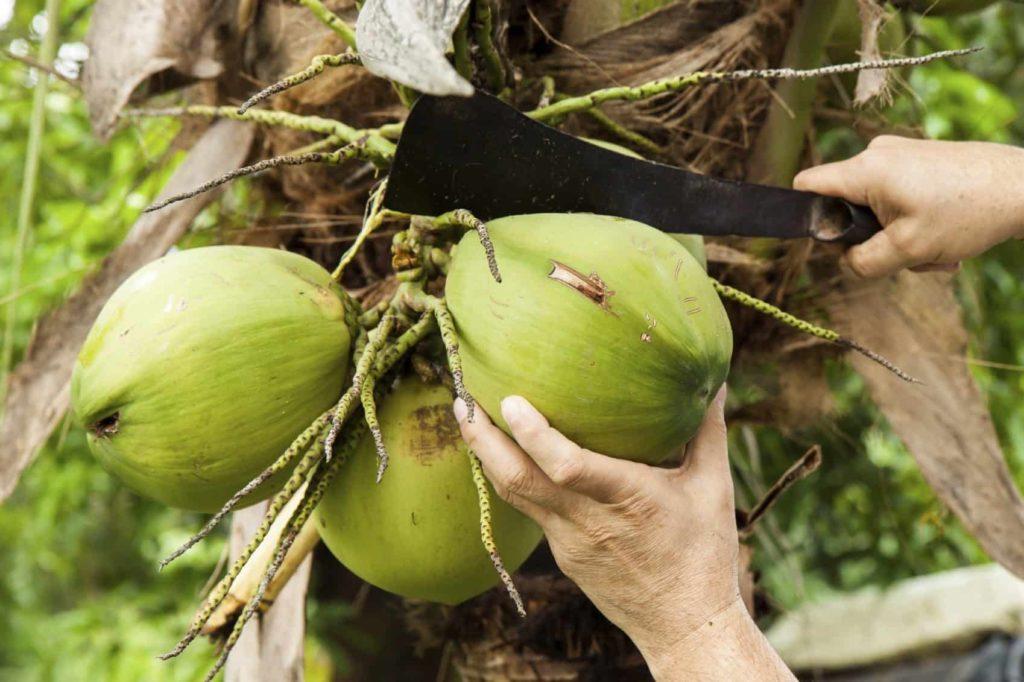 raw-coconut