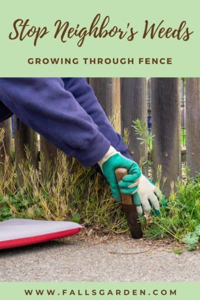 neighbors-weeds-growing-through-fence