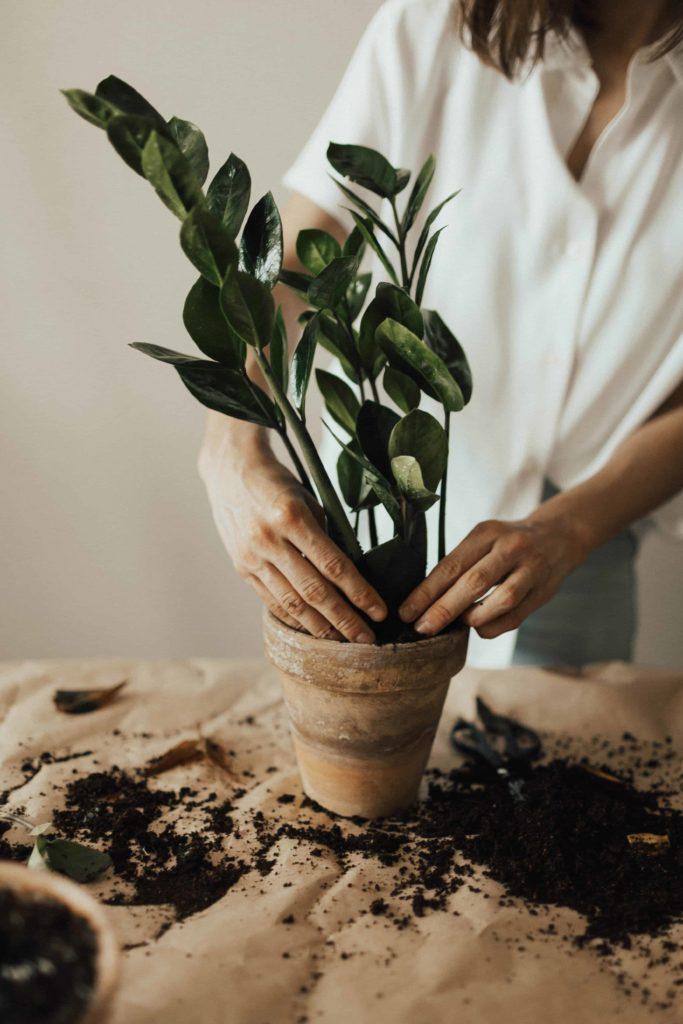 potting-soil-expiry-date
