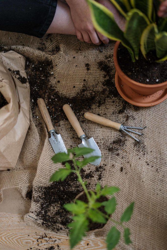potting-soil-gone-bad