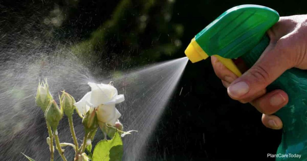 does-kerosene-eliminate-weeds