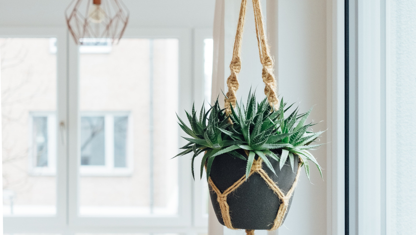 Hang-plants-without-drilling