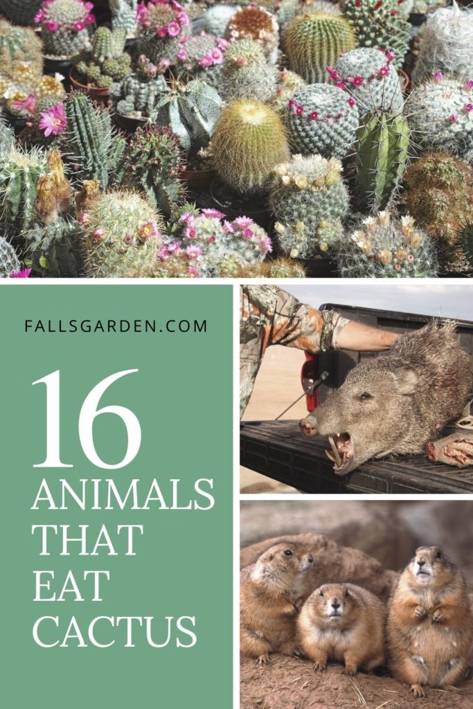 animals-that-eat-cacti