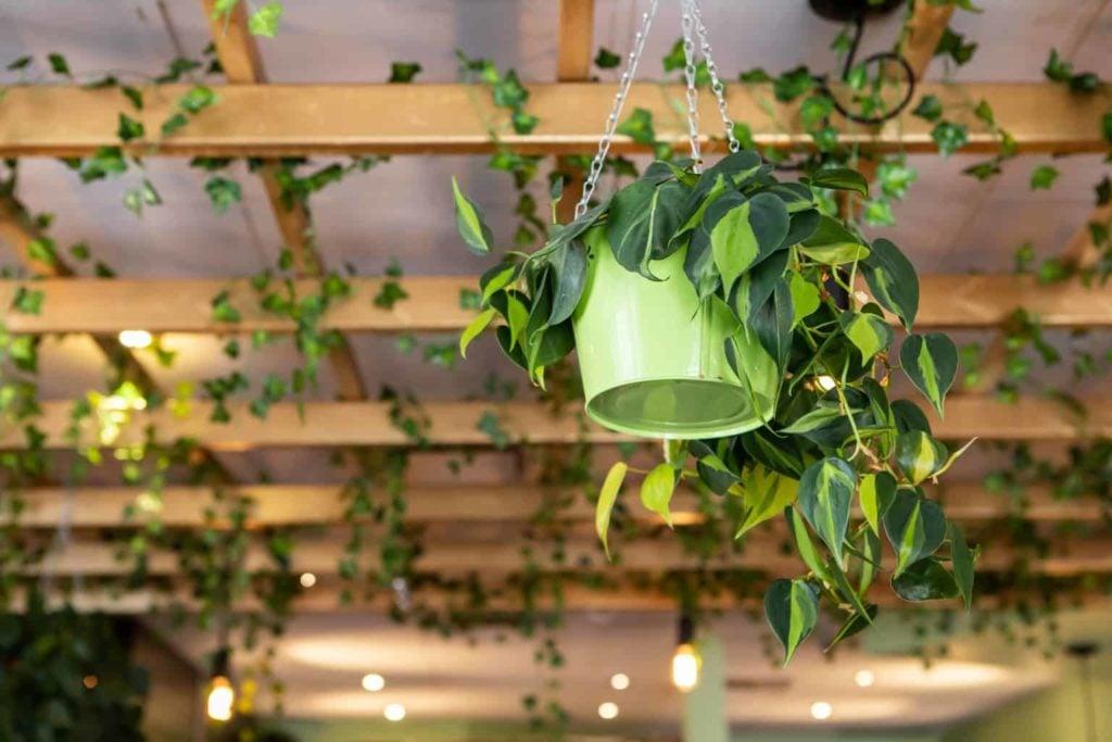 Sturdy-decorative-plants