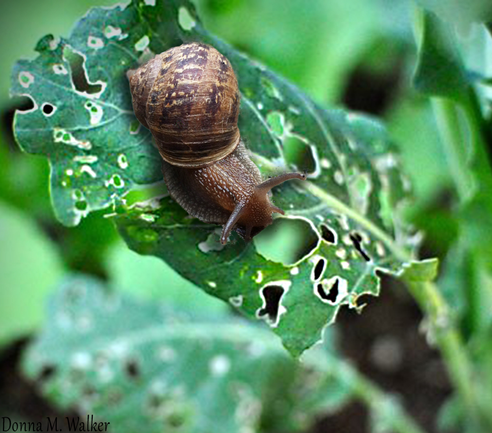 Snails-on-peppers