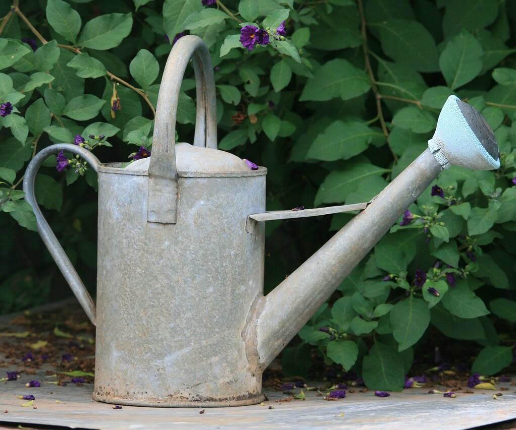 Rusty-metal-watering-can