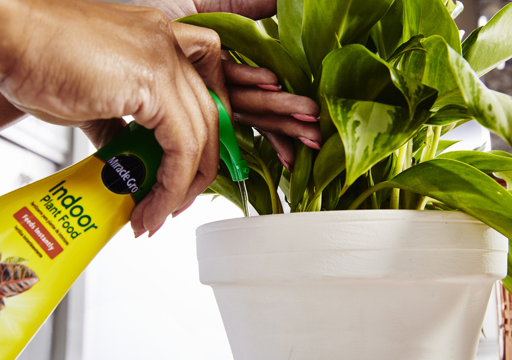 Fix-too-much-miracle-gro