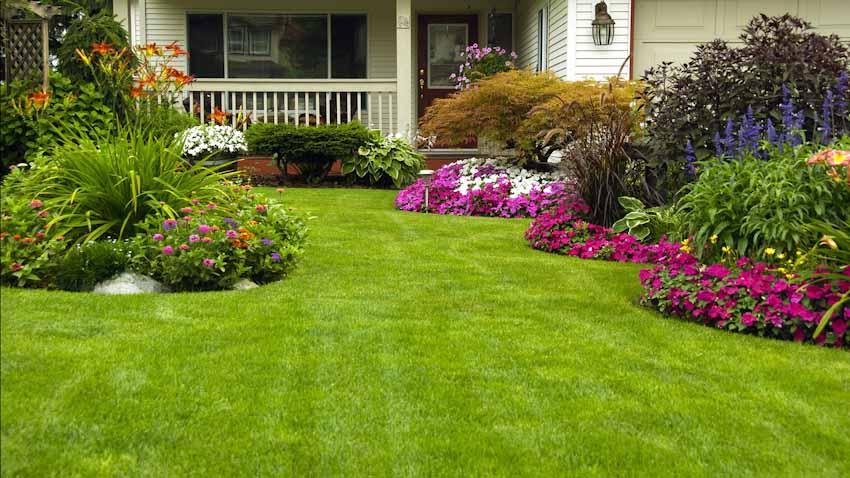 Simple-green-grass