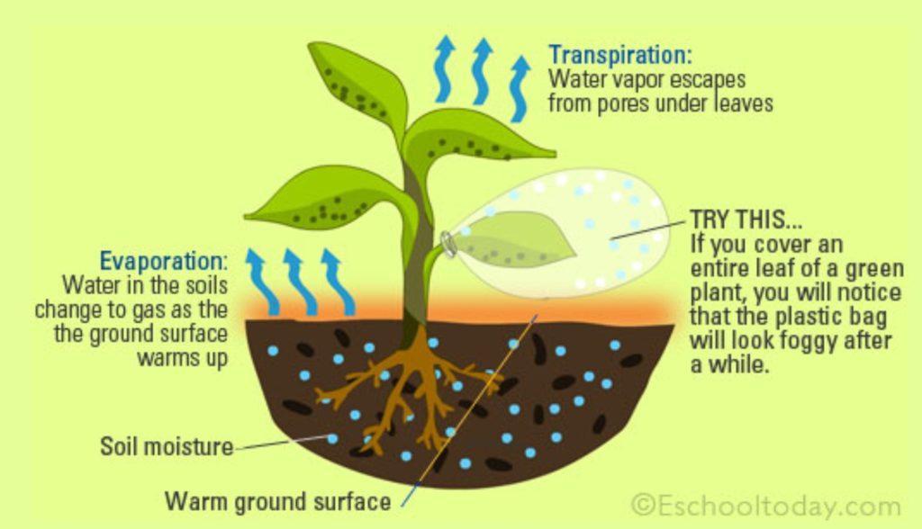 evaporation-and-transpiration