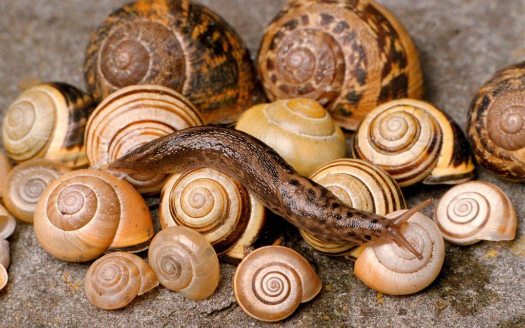 Snails-and-slugs