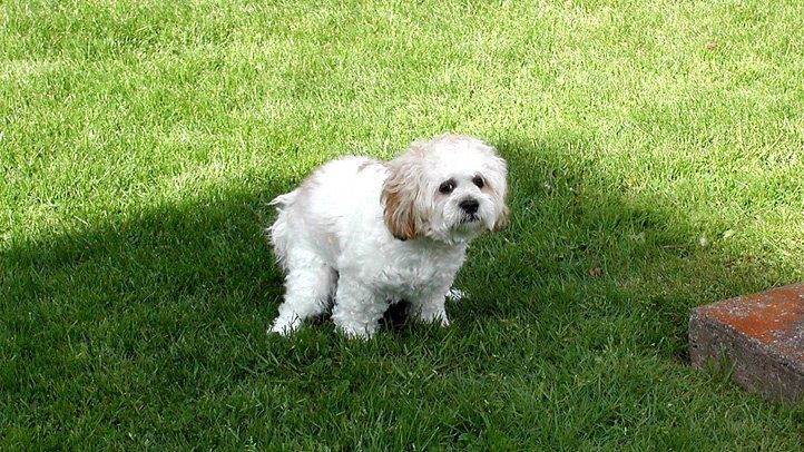 Dogs-popping-in-your-yard